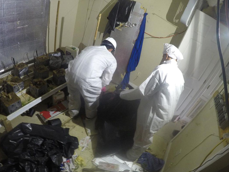 Our technicians specialize in the remediation of a home after it has been used as a grow house.