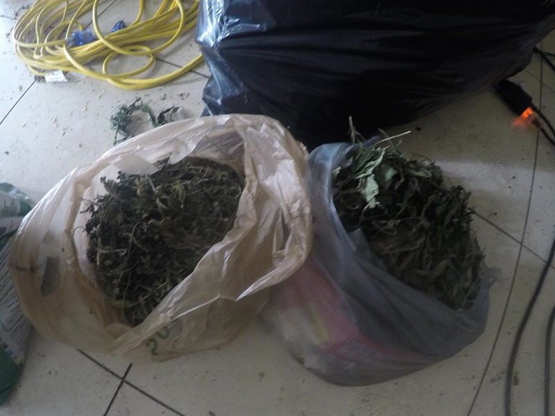 CleanPro Restoration specializes in Marijuana grow house clean up services in Miami.